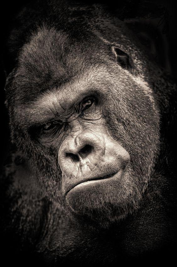 sight primate